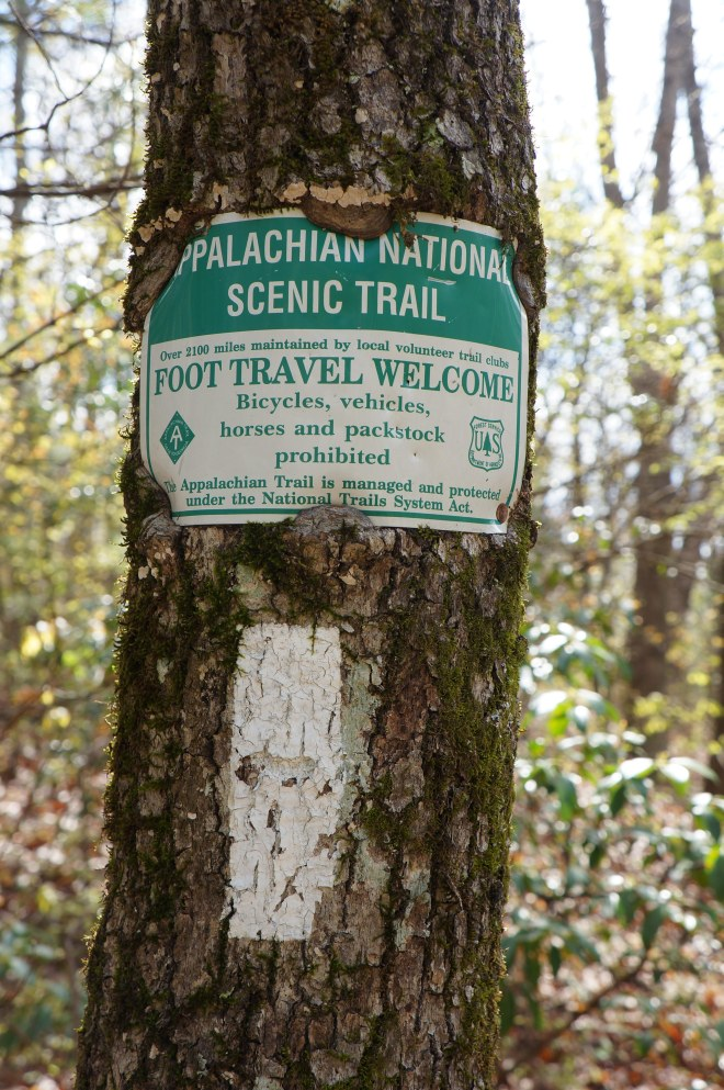 One of the first white blazes of the Appalachian Trail near Springer Mountain in Georgia.