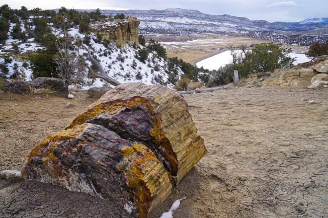Petrified wood overlooking the Wide Hollow Reservoir in Escalante, Utah